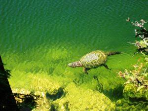 crawford-lake